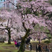 小石川後楽園に桜を見に