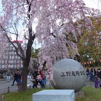 上野公園の桜を求めて 2017/04/03