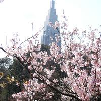 新宿御苑のお花見散歩(2017年4月)