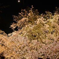 やっと桜が咲いた飛鳥山