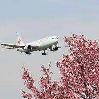 さくらの山で飛行機とサクラを見る(咲いてたのは僅か)、アクセスは少し便数が増えたバスで。
