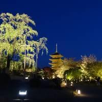 京都の世界遺産巡り 東寺・醍醐寺