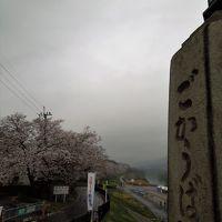 [報告2] 2017年 やっと京都に桜の満開がやって来ました!