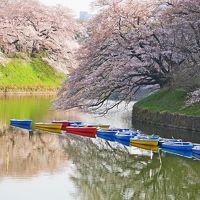 今年も美しい桜を見たくて@出勤前の千鳥ヶ淵2017