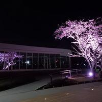 茨城県南・水戸地域の桜を楽しむ 2017