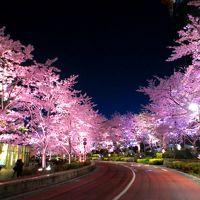 一番の見頃〜都心の春の楽しみ方〜青空の桜・夜桜・桜スイーツ・芝桜テラス