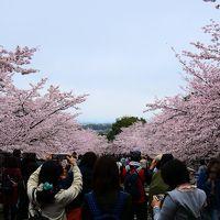 春の京都 今年の花見は曇りのち雨