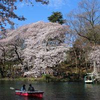 桜を愛で散歩<六義園・井の頭公園・高尾山>