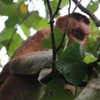 【2017年 マレーシア】娘に会いにマレーシアへ、でも勝手にブラブラ その12 7日目 バコ国立公園で自然を満喫するつもりでしたが