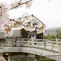 関西のお花見スポットランキング第一位!「背割提」と国宝に選ばれた「石清水八幡宮」がある八幡市をブラリ!