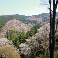 奈良・吉野山の一目千本桜