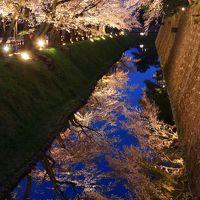 石川 桜めぐり〜奥卯辰山健民公園、尾崎神社、金沢城、兼六園