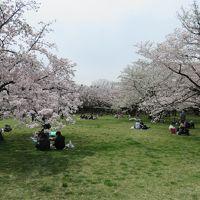 立川の国営昭和記念公園を初訪問(4月10日は桜満開の日)
