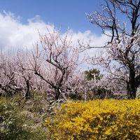 春の信州ドライブ�(あんずの里・松代・小布施・渋温泉)