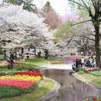 桜吹雪の中でチューリップオフ会@昭和記念公園