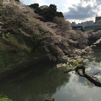 2017年のお花見・千鳥ヶ淵