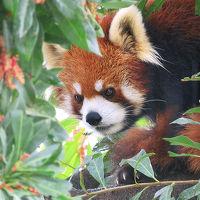 雨の大牟田市動物園 【北九州の旅2日目】