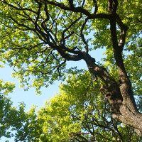 小金井公園でお昼寝