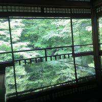 京都 少しマイナーな深緑の名所めぐり