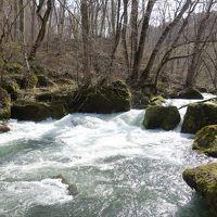 奥入瀬渓流と弘前桜まつり