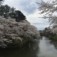 桜を追って青森へー弘前市・芦野公園・青森市