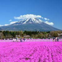 富士山大展望!竜ヶ岳ハイキングと富士芝桜まつり