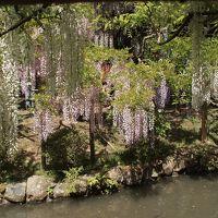 五月晴れの奈良をてくてく �万葉植物園の藤