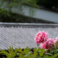 傘寿を越えて 奈良旅を −2 牡丹の咲く 長谷寺へ
