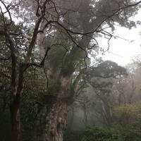 屋久島旅行3泊4日+α 素晴らしい自然、食、そして人〔その2:5/3雨の縄文杉ハイキング〕(2017年GW)