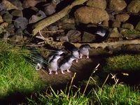 ダニーデンのオタゴ半島でブルーペンギン観覧,そして撮影