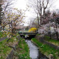 400-札幌市内近郊、地元民おすすめの桜名所めぐり