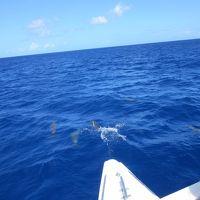 小松からの初めてのグアム 海はきれい イルカいっぱい