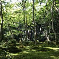 青もみじを楽しむ初夏の京都 1日目 嵯峨野・嵐山・MK夜バス 2017年5月
