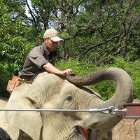 GW中の無料大混雑デーの上野動物園