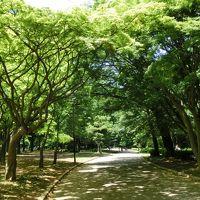 新緑のトンネルが眩しい(≧▽≦)代々木公園