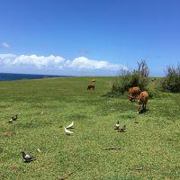 イアオ渓谷&ホオキパビーチ&パイア ハワイ初上陸なのにマウイ島Vol.3