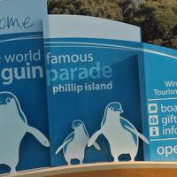 こんなところにペンギン フィリップ島 / 2017 オーストラリア 2