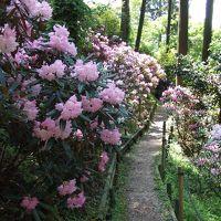 しっとりと春爛漫の奈良へ 〜追憶〜