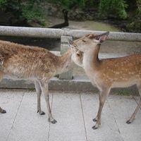奈良〜世界遺産めぐり