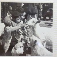 1956年(昭和31年)10月 初めての上野動物園(その後、何回も上野動物園 美術館 博物館 東京文化会館等を訪れます。)