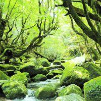 君とイク夏2017�緑あふれる屋久島の、苔むす森へレッツゴー。白谷雲水峡トレッキング♪