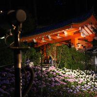 あじさいを観に京都へ。【2/2】 -- 宇治だから平等院、宇治上神社、三室戸寺のあじさいライトアップ --