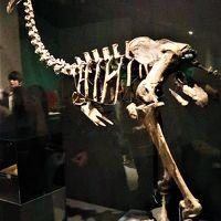大英自然史博物館展-3 自然史を貫く精神 ☆モア・・絶滅した巨鳥の痕跡を求め