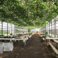 7月三連休の最終日、孫娘たちと藤沢・湘南台の「弁慶果樹園」でBBQ