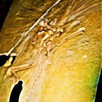 大英自然史博物館展-4 科学史を変えた発見/論文 ☆始祖鳥・・最古の鳥類化石