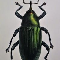 大英自然史博物館展-7  私たちの周りの多様な世界 ☆多種の昆虫・絶滅した棒物など