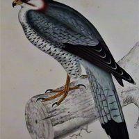 大英自然史博物館展-9 自然史研究を支える書籍や資料 ☆貢献した人々