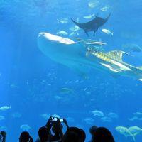 沖縄家族旅行・・美ら海水族館(1)の紹介です。