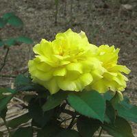 ひろしまからの平和メッセージ〜原爆の子の像が見つめる景色に咲く花〜
