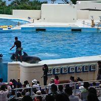 沖縄美ら海水族館に行きました